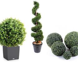 Nos végétaux en vente